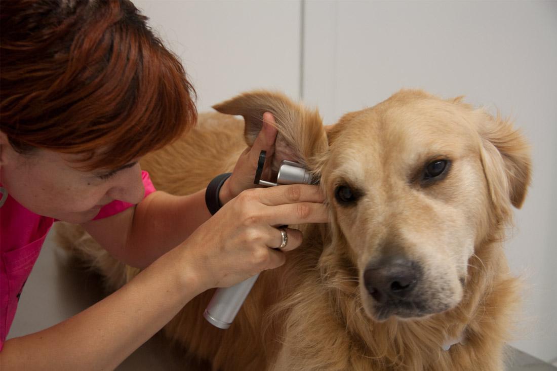 paula-mira-veterinaria-3