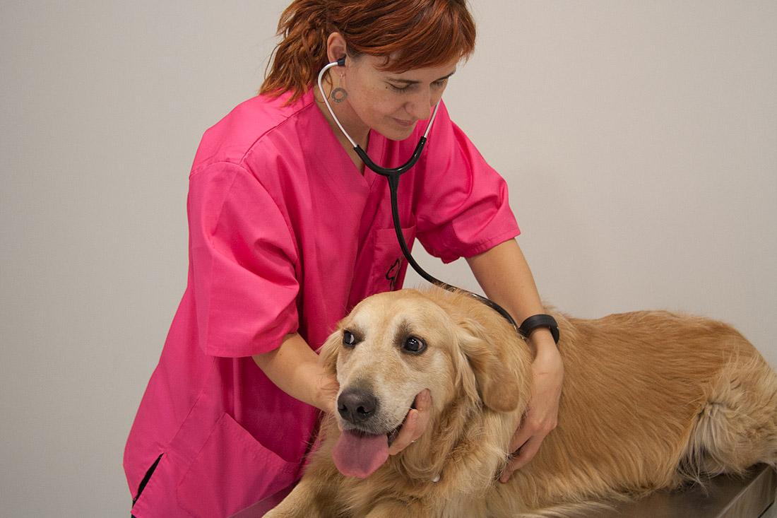 consulta-medicina-general-especialitats