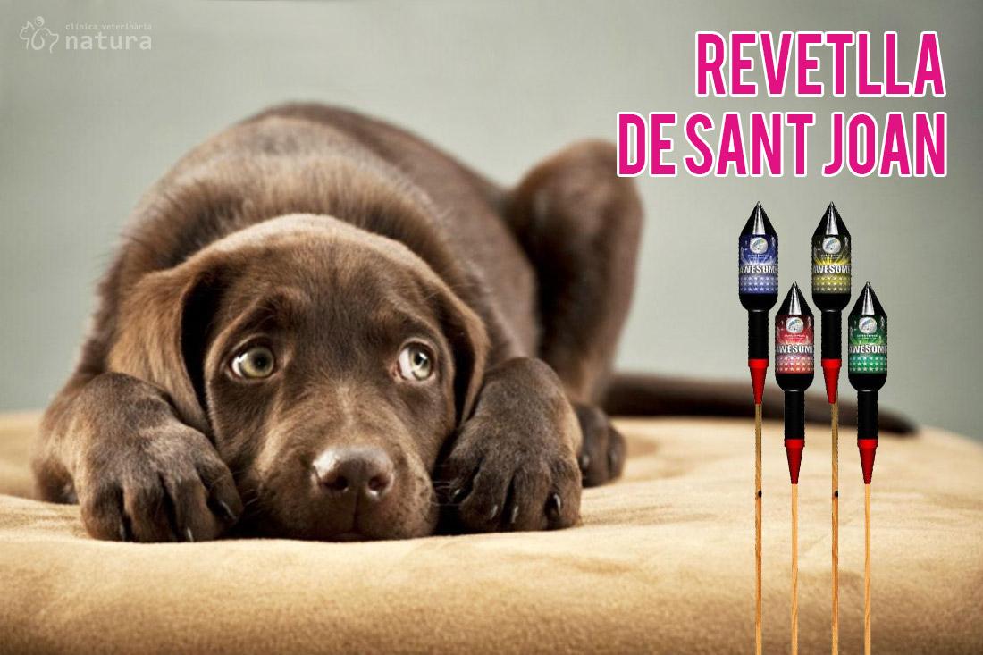 revetlla-de-sant-joan-gossos